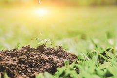 Крупный план завода в почве, окружающей среде, экологичности, земледелии и Стоковое Изображение RF