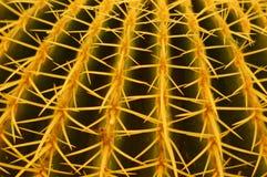 крупный план кактуса Стоковое Изображение RF