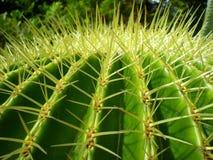 крупный план кактуса Стоковая Фотография