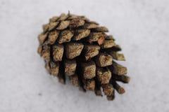 Крупный план коричневого конуса ели в снеге Стоковые Фото