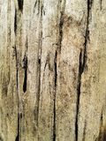 Крупный план коры дерева годный к употреблению как текстура или предпосылка древесина brougham стоковые фотографии rf