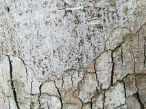 Крупный план коры дерева годный к употреблению как текстура или предпосылка древесина brougham стоковая фотография rf
