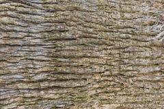 Крупный план коры ладони или плоского дерева r стоковое изображение