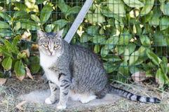 Крупный план кота красоты Стоковая Фотография