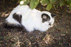 Крупный план кота красоты Стоковые Фото