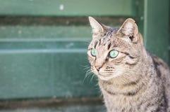 Крупный план кота красоты Стоковые Фотографии RF