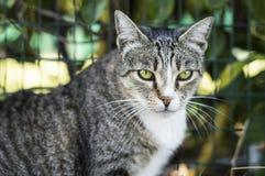 Крупный план кота красоты Стоковое Изображение