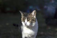 Крупный план кота красоты Стоковое Изображение RF