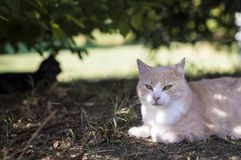 Крупный план кота красоты Стоковые Изображения RF
