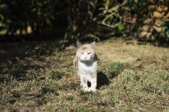 Крупный план кота красоты Стоковое Фото