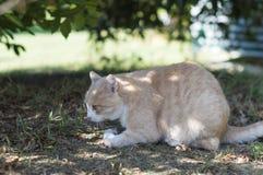 Крупный план кота красоты Стоковая Фотография RF