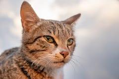Крупный план кота на расплывчатой белой предпосылке стоковые изображения rf