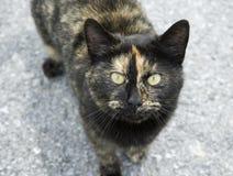 крупный план кота смотря вверх Стоковые Фотографии RF