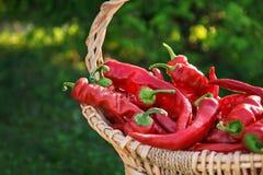 Крупный план красного перца в корзине корзины outdoors стоковое фото rf