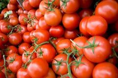 Крупный план красных томатов с зелеными листьями стоковое изображение rf