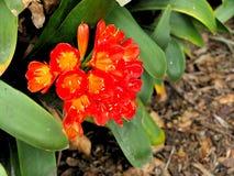 Крупный план красных цветков с зеленым цветом выходит в сад бабочки в Санта-Барбара Калифорнии Объектив макроса с bokeh для знаме стоковая фотография