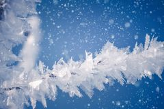Крупный план кристаллов снега на ветви на морозный зимний день стоковое фото rf