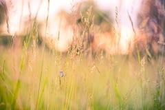 Крупный план лета цветет и луг и бабочка яркий ландшафт Вдохновляющая предпосылка знамени природы Стоковые Изображения RF