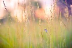 Крупный план лета цветет и луг и бабочка яркий ландшафт Вдохновляющая предпосылка знамени природы Стоковая Фотография RF