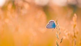 Крупный план лета цветет и луг и бабочка яркий ландшафт Вдохновляющая предпосылка знамени природы Стоковая Фотография