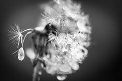 Крупный план лета цветков и луга одуванчика яркий ландшафт Вдохновляющая предпосылка знамени природы Стоковые Изображения