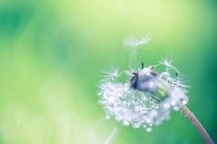 Крупный план лета цветков и луга одуванчика яркий ландшафт Вдохновляющая предпосылка знамени природы Стоковые Фотографии RF