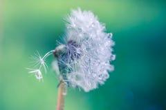 Крупный план лета цветков и луга одуванчика яркий ландшафт Вдохновляющая предпосылка знамени природы Стоковое фото RF