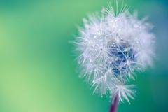 Крупный план лета цветков и луга одуванчика яркий ландшафт Вдохновляющая предпосылка знамени природы Стоковое Фото