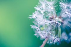 Крупный план лета цветков и луга одуванчика яркий ландшафт Вдохновляющая предпосылка знамени природы Стоковые Фото