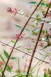 Крупный план листвы стоковые изображения