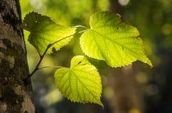 Крупный план листвы стоковая фотография rf
