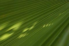 Крупный план листьев ладони Стоковая Фотография RF