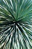 Крупный план листьев похожего на palmtree завода стоковое изображение rf