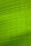 Крупный план листьев с падениями воды Стоковые Фотографии RF