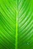 Крупный план листьев стоковые изображения rf