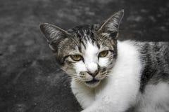 Крупный план любимца стороны кота животный стоковая фотография rf