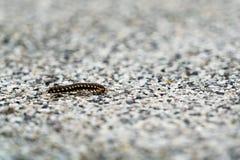 Крупный план малое насекомое идя самостоятельно на поверхность гравия нерезкости Стоковое Изображение
