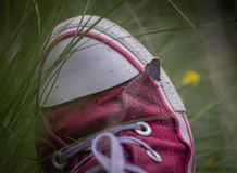 Крупный план малой или общей медной бабочки, phlaeas голубянок сидя na górze розовых тапок женщины Стоковое Изображение RF