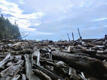 Крупный план массивной кучи большого driftwood вдоль удаленного пляжа во в стоковые изображения