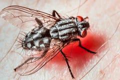 Крупный план мухы стоковая фотография