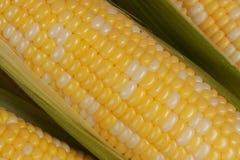 Крупный план на corncobs Стоковые Изображения RF