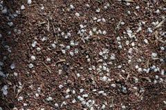 Крупный план небольших белых лепестков вишни разбросанных на песок стоковая фотография rf