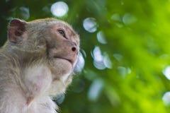 Крупный план одичалой обезьяны Стоковые Изображения