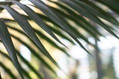 Крупный план пальмы выходит с предпосылкой bokeh стоковое изображение rf