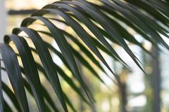 Крупный план пальмы выходит с предпосылкой bokeh стоковые изображения