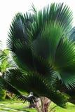 Крупный план пальмы, тропическая предпосылка стоковые изображения rf