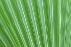 Крупный план пальмы стоковые изображения rf