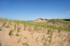 Крупный план песчанных дюн Cavendish Стоковые Фотографии RF