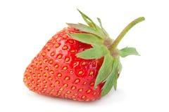 Крупный план плодоовощ клубники на белизне Стоковые Изображения RF