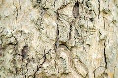 Крупный план поверхности раковины дерева См. картину ясно стоковые фото